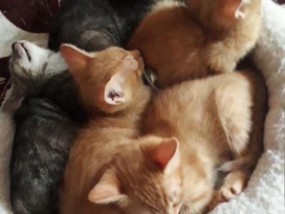 Pisoi dragalasi pentru adoptie