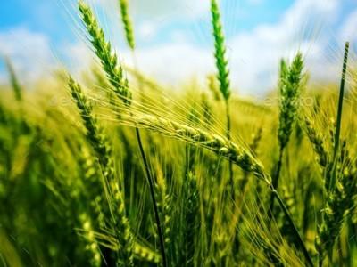Vând fermă agricolă vegetală