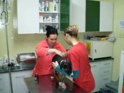 Curs tehnician veterinar
