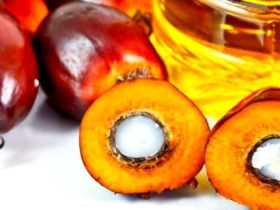 Firma import-export videm ulei de palmier
