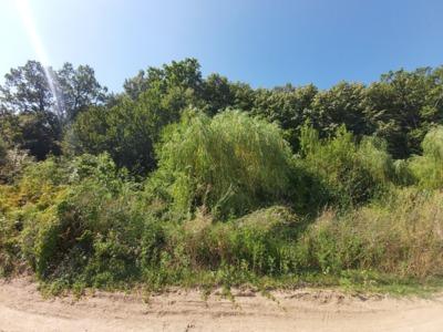 Vand teren peris, scrovistea