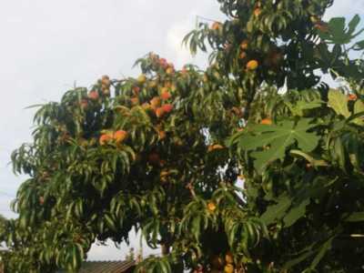 Taiat la rod pomi si arbusti, stropiri de sezon