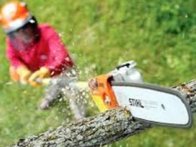 Ferastrau toaletat copaci de inchiriat