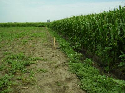 Gard impotriva animalelor de prada