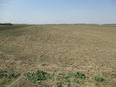 Dau in arenda teren agricol suceava 550 hectare